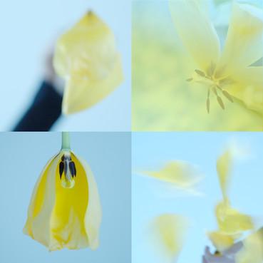 Tulpen.02