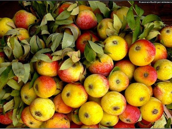 Tasting apple cider on Etna