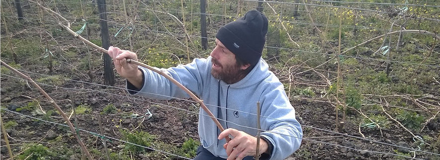 dvide bentivena training a vine on Santo Spirito Vineyard