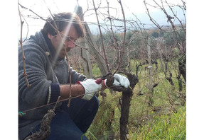 Learn how we cultivate and pruning our vineyard