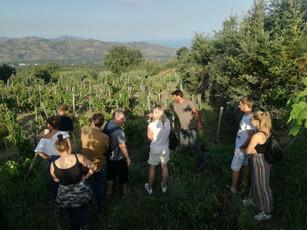 Vinyard Tour Sicily Etna Natural Wine Davide Bentivegna