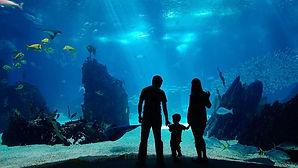 Shedd Aquarium.jpg