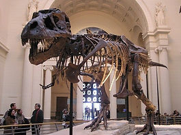 field-museum-natural-history-chicago.jpg