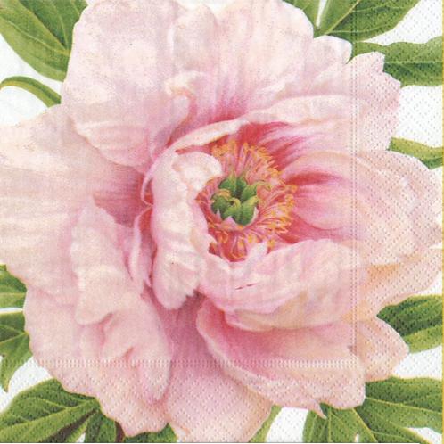 Blush Paper Dinner Napkins - 20 Per Package