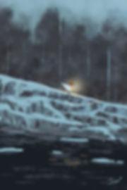 3 snow forest.jpg