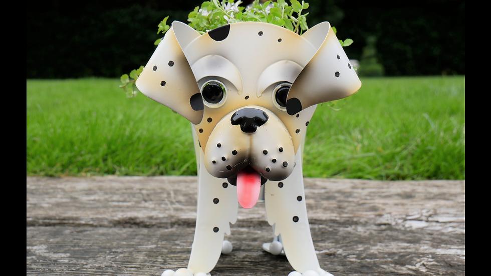 Dalmatian Planter