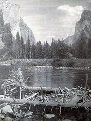 Yosemite  Valley Floor  Louise Schiele