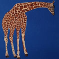 giraffe in a blue box.jpg