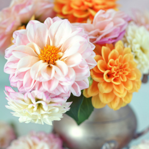 Paint by Numbers Kit- Darling Dahlia