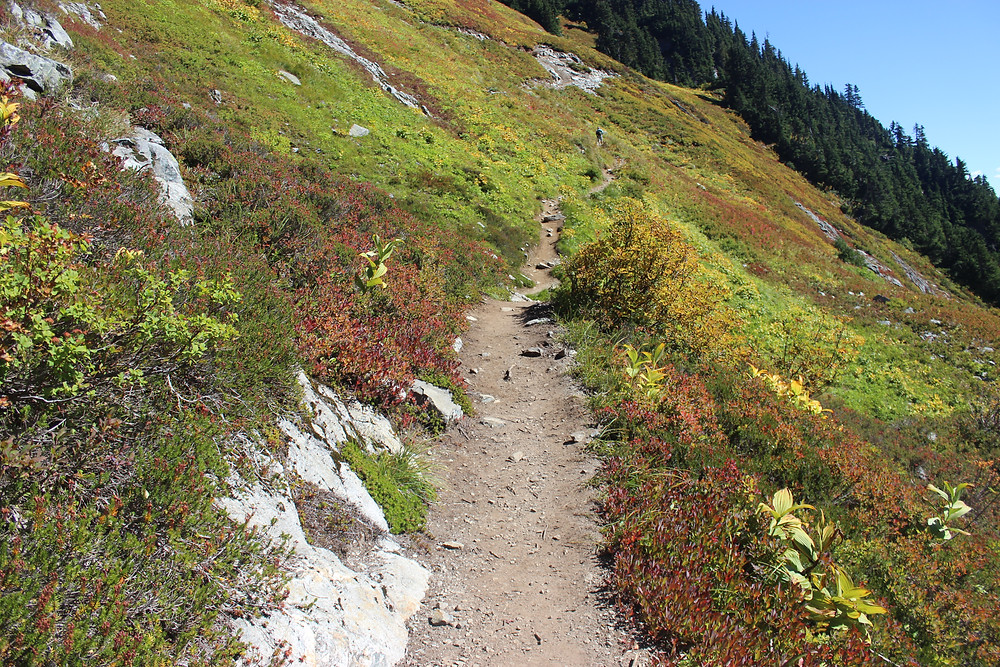 A photo of the Cascade Pass trail crossing a multi-colored meadow in the North Cascades.