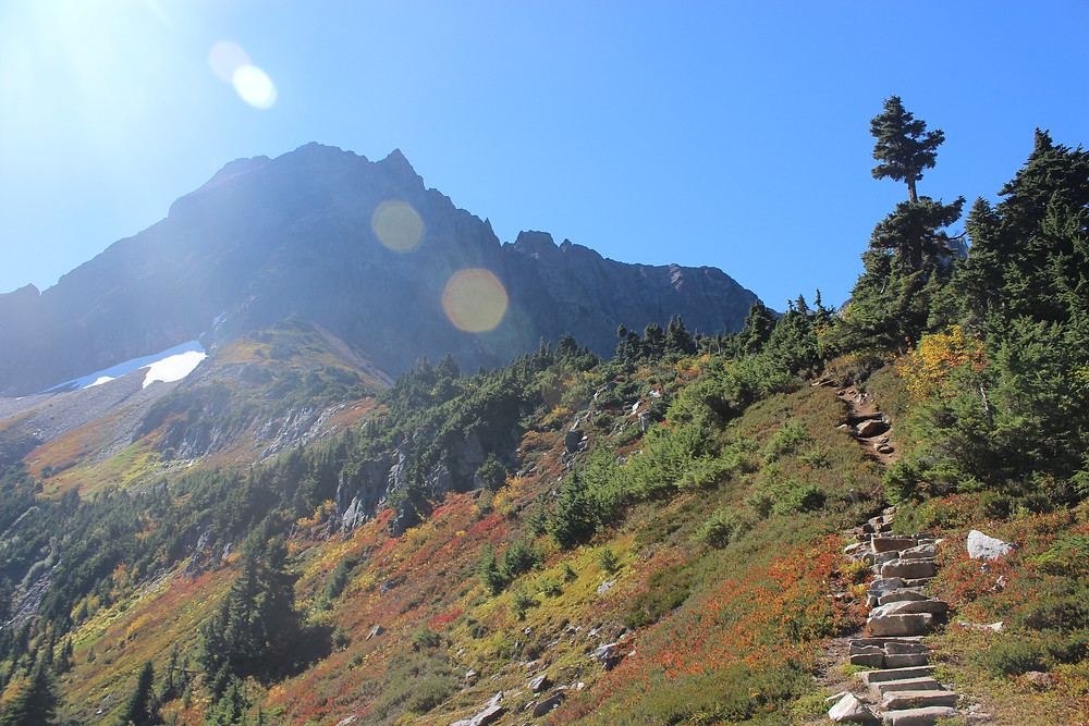 A photo of the stone staircase at Cascade Pass in the North Cascades, ascending towards Mix-It-Up Peak along a ridge covered in colorful fall berry patches and western hemlock.