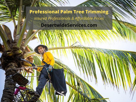 Affordable Palm Tree Trimming Services