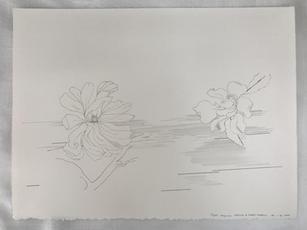 Flight- Magnolia Stellata and twirled gardenia, 2020
