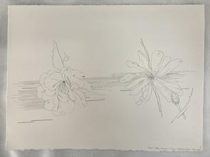 Flight- fallen camellia and open Magnolia Stellata, 2020