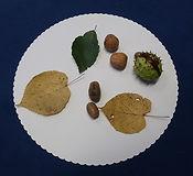 Herbst Mandala.jpg