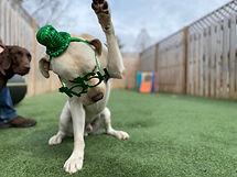 PawsCienda's Doggie DayCamp AMEN