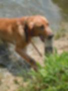 Dog Training in Richmond Virginia
