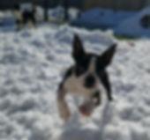 It snowed at the PawsCienda Pet Resort in Montpelier Virginia