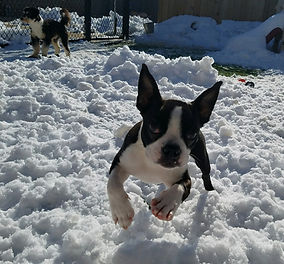 It snowed at the PawsCienda Pet Resort in Montpelier Virginia