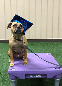 Bo Duke Dog Training in Hanover County