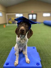 Graham Dog Training in Virginia