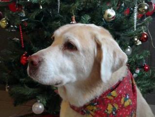 3 TIPS ON FEEDING YOUR SENIOR DOG
