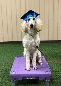 Raph Dog Training in Virginia