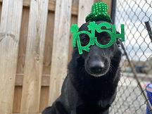 Dog Day Care Richmond Virginiai