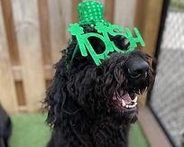 Glen Allen Doggie DayCamp IRISH