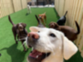 Selfie at the PawsCienda Pet Resort in Montpelier Virginia