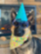 It's my Birthday - Party day at the PawsCienda Pet Resort