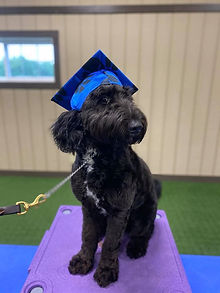 Zoey Dog Training in Central Virginia
