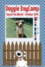 Dog of the Month - October 2019 - Pippi.