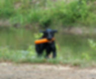 Training Dogs in Richmond Virginia