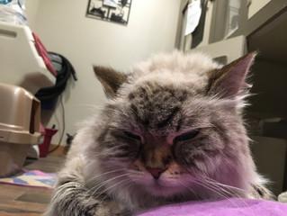The Life and Times of Sasha PawsCienda's Lodge Kitty