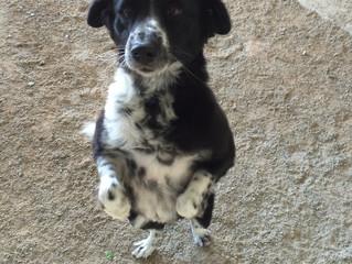 Why Does My Dog… Walk Between My Legs?
