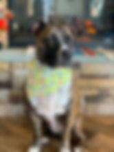 Alexis on her Birthday at the PawsCienda Pet Resort in Virginia