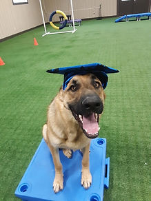 Shadow Dog Training in Virginia
