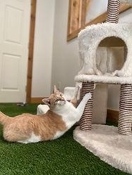 Fun Cat Room at PawsCienda in Virginia