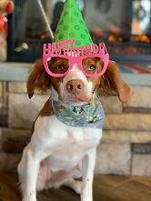 Birthday Party at PawsCienda Pet Resort in Virginia