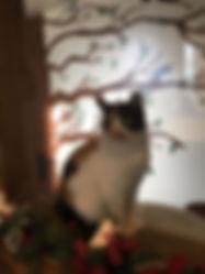Zoe 2019.jpg