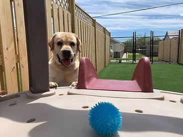My Ball with Ben at PawsCienda's Doggie DayCam in Ricmond Virginia