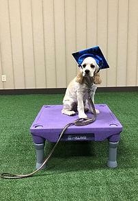 Emma Dog Training in Hanover County