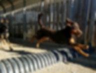 Jump at PawsCienda's Doggie DayCamp in Virginia