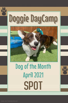 Doggie DayCamp of the Month April 2021 S