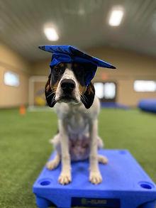 Barney Dog Training in Virginia