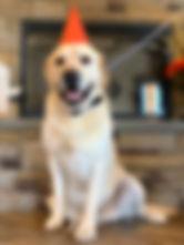 Ben at he PawsCienda Pet Resort