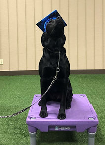 Governor Dog Training in Hanover County