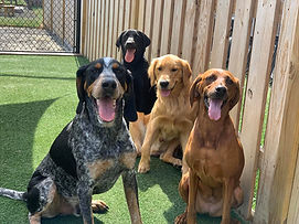 Friends at PawsCienda's Doggie Day Care in Richmond Virginia