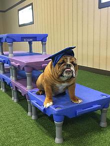 Max Dog Training in Virginia